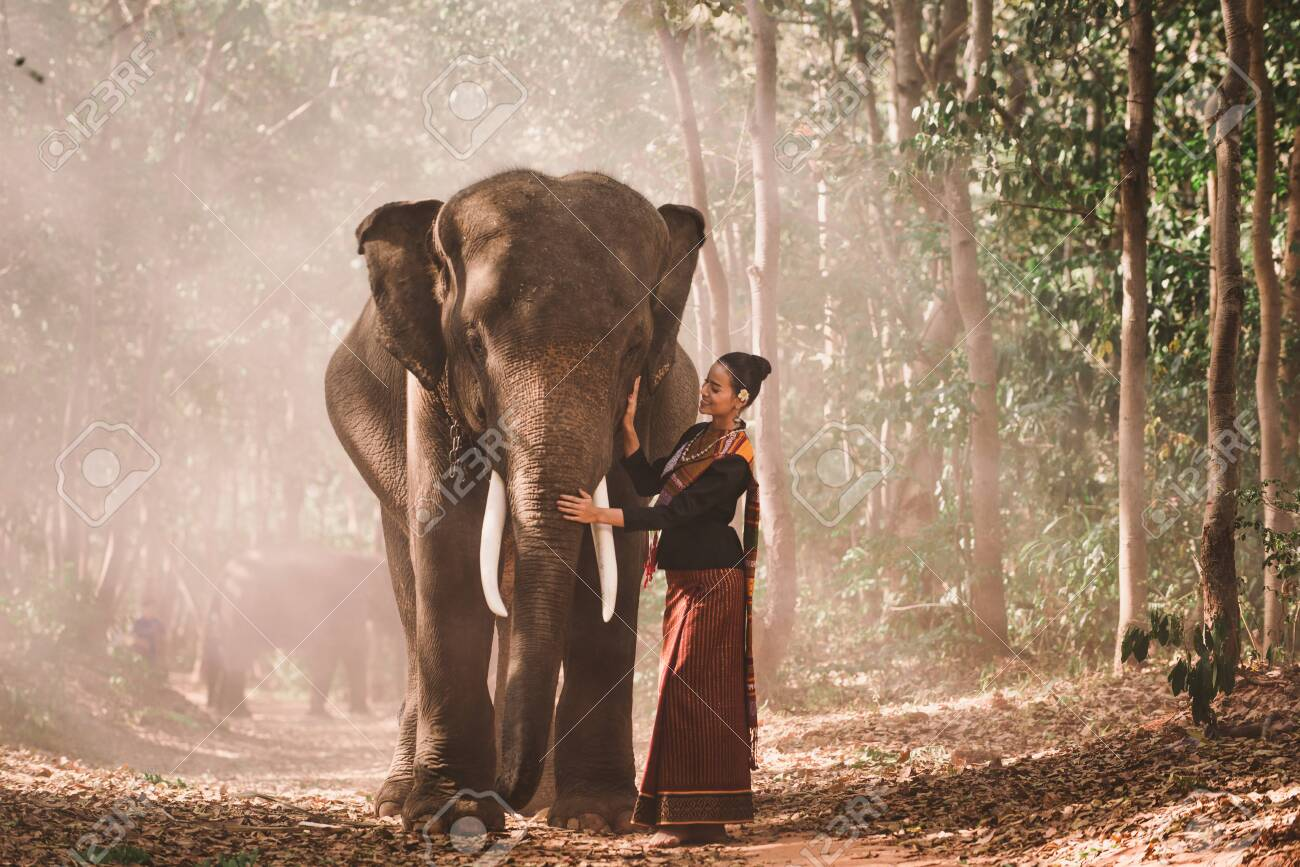 Elephant with beautiful girl in asian countryside, Thailand - 127267579