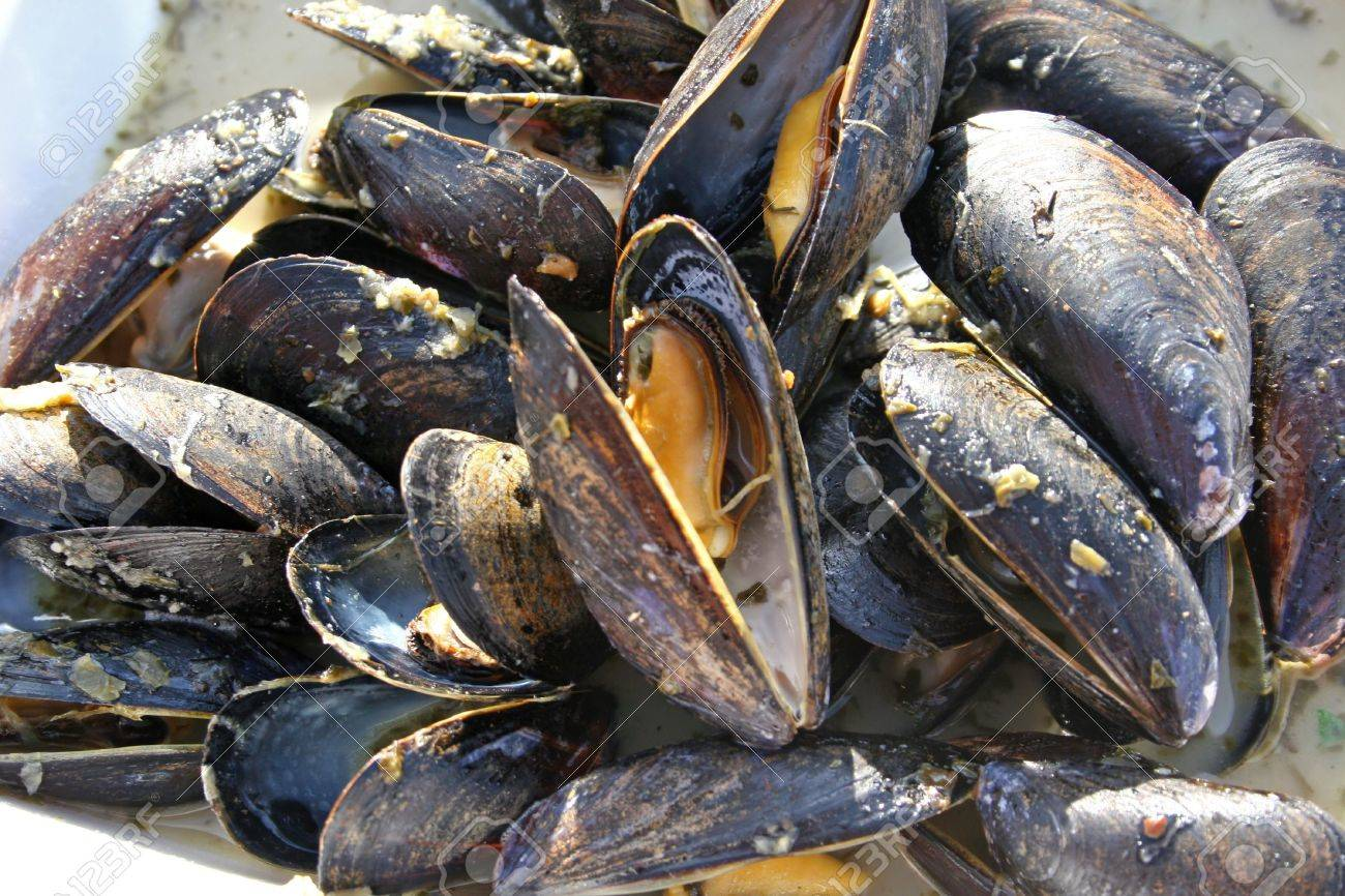 Cooked mussels ready to eat - 3314725