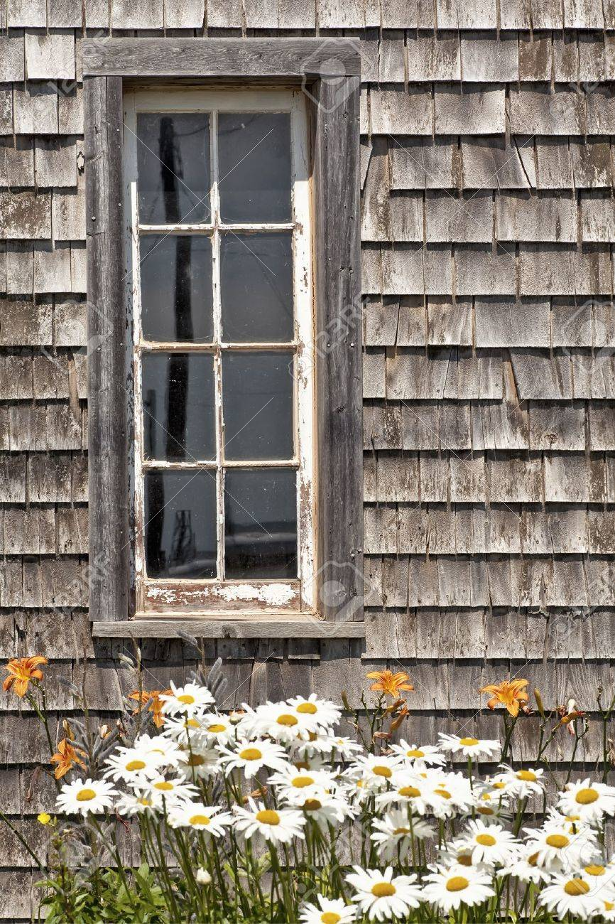 Daisies and daylilies in front of a rustic barn window. - 12012484