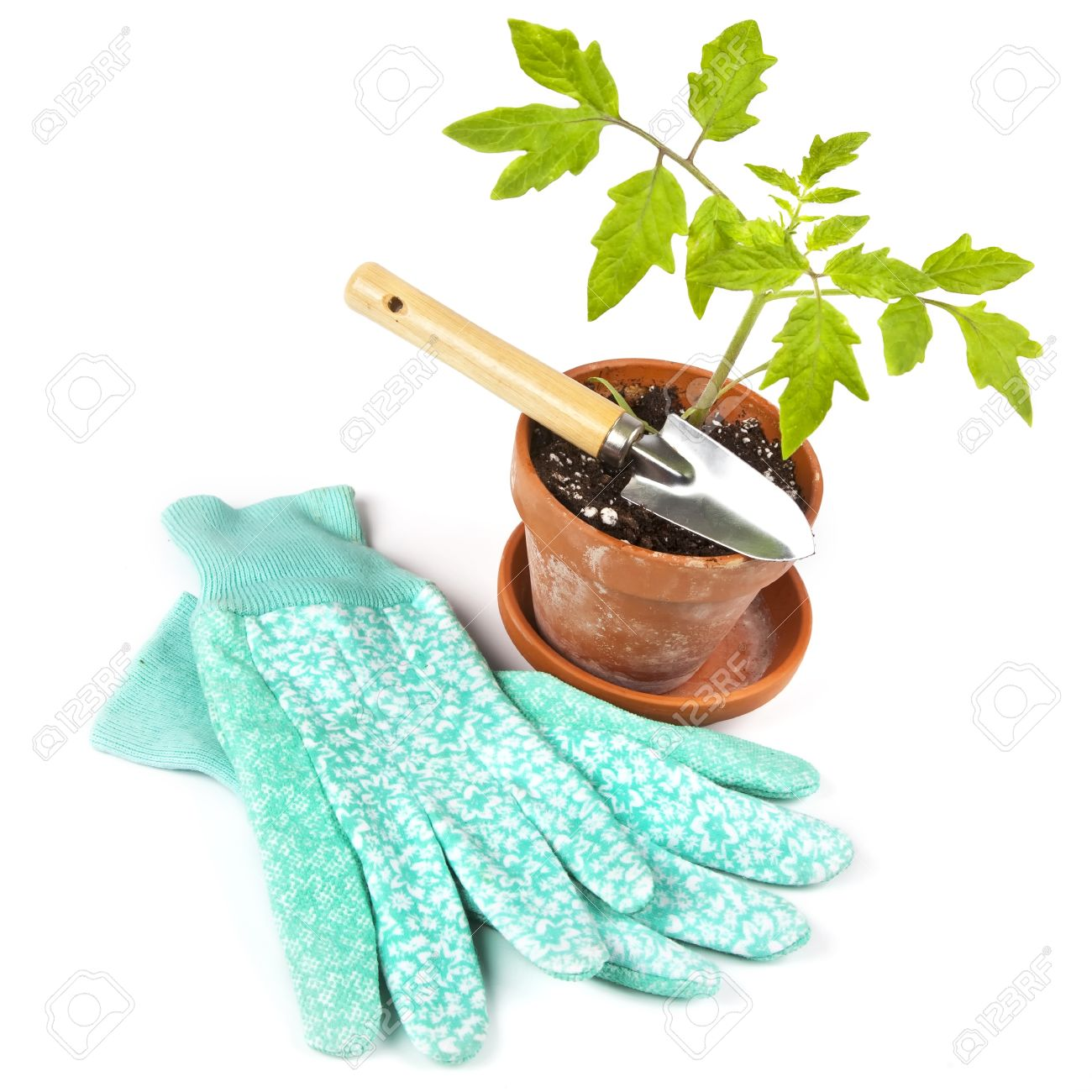 Gardening gloves, a garden trowel and a potted tomato plant ready for planting outside in the garden. Stock Photo - 12711119