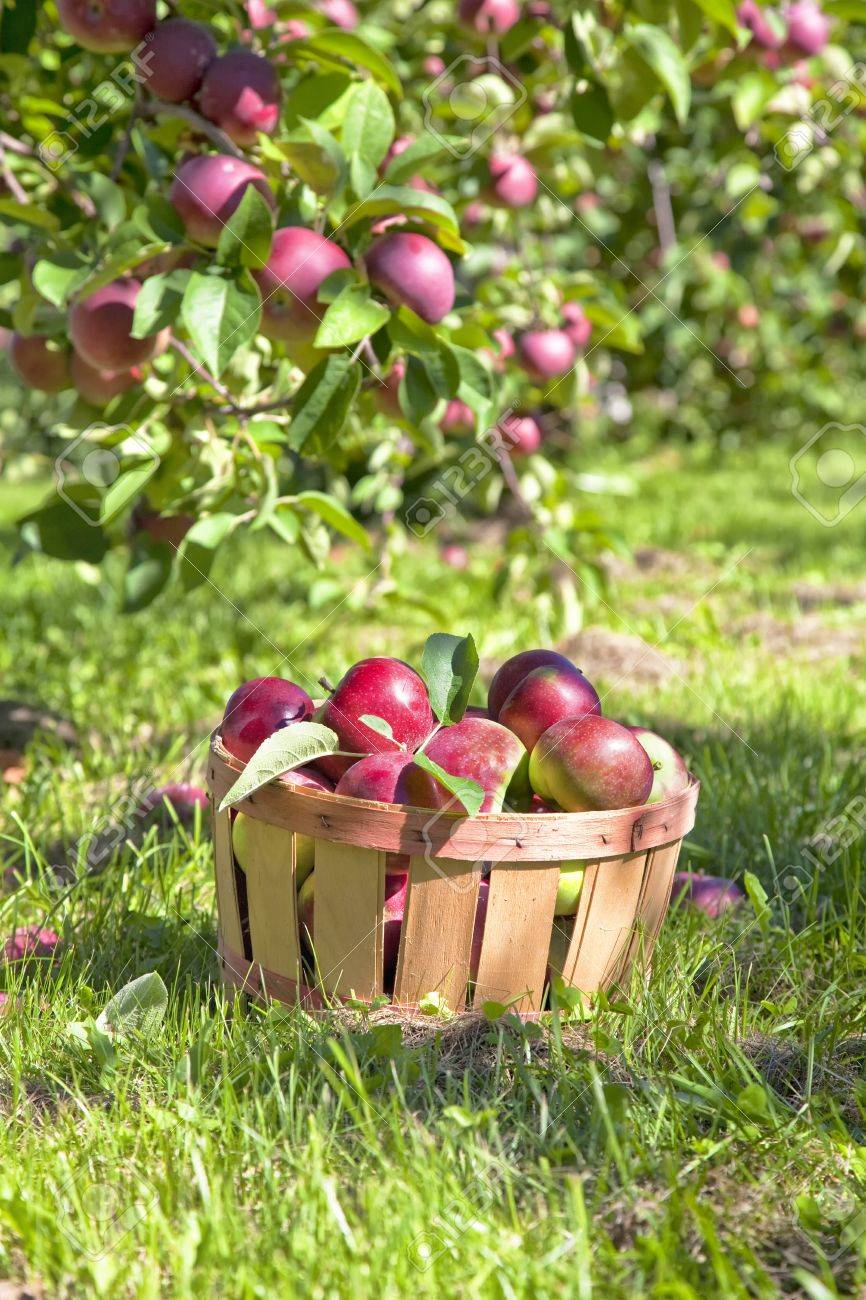 Autumn view from the farm's apple harvest. Stock Photo - 15637311