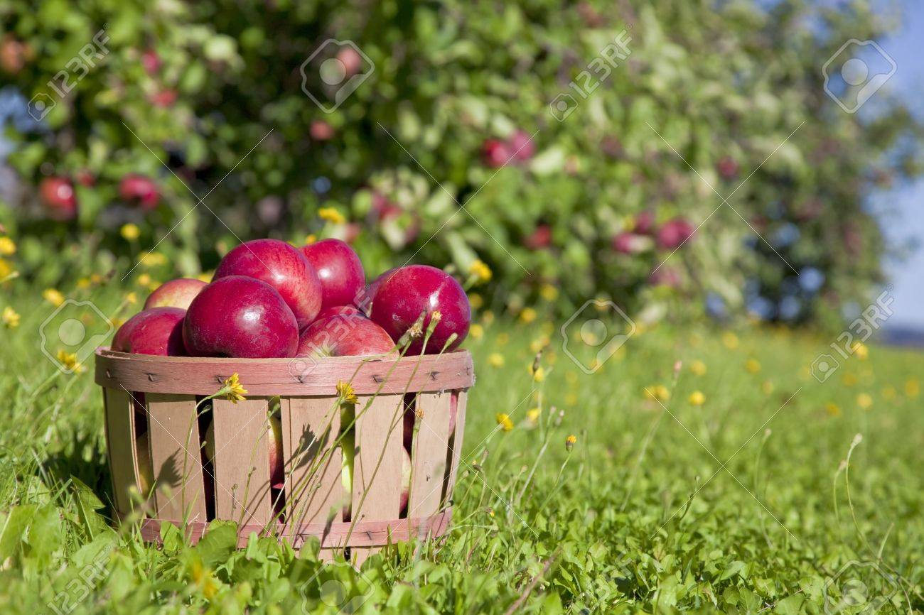 Autumn view from the farm's apple harvest. Stock Photo - 15637310