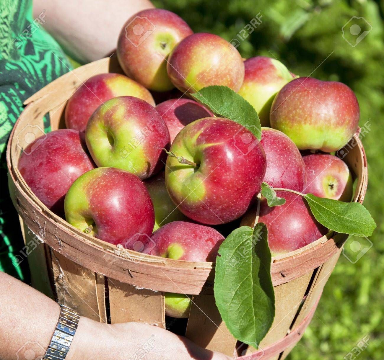 Autumn view from the farm's apple harvest. Stock Photo - 15637318