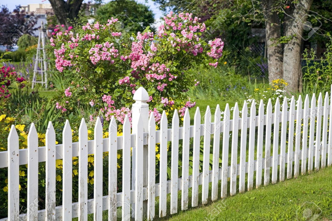 Rustic white picket fence with roses and other flowers in the background. Stock Photo - 24266351