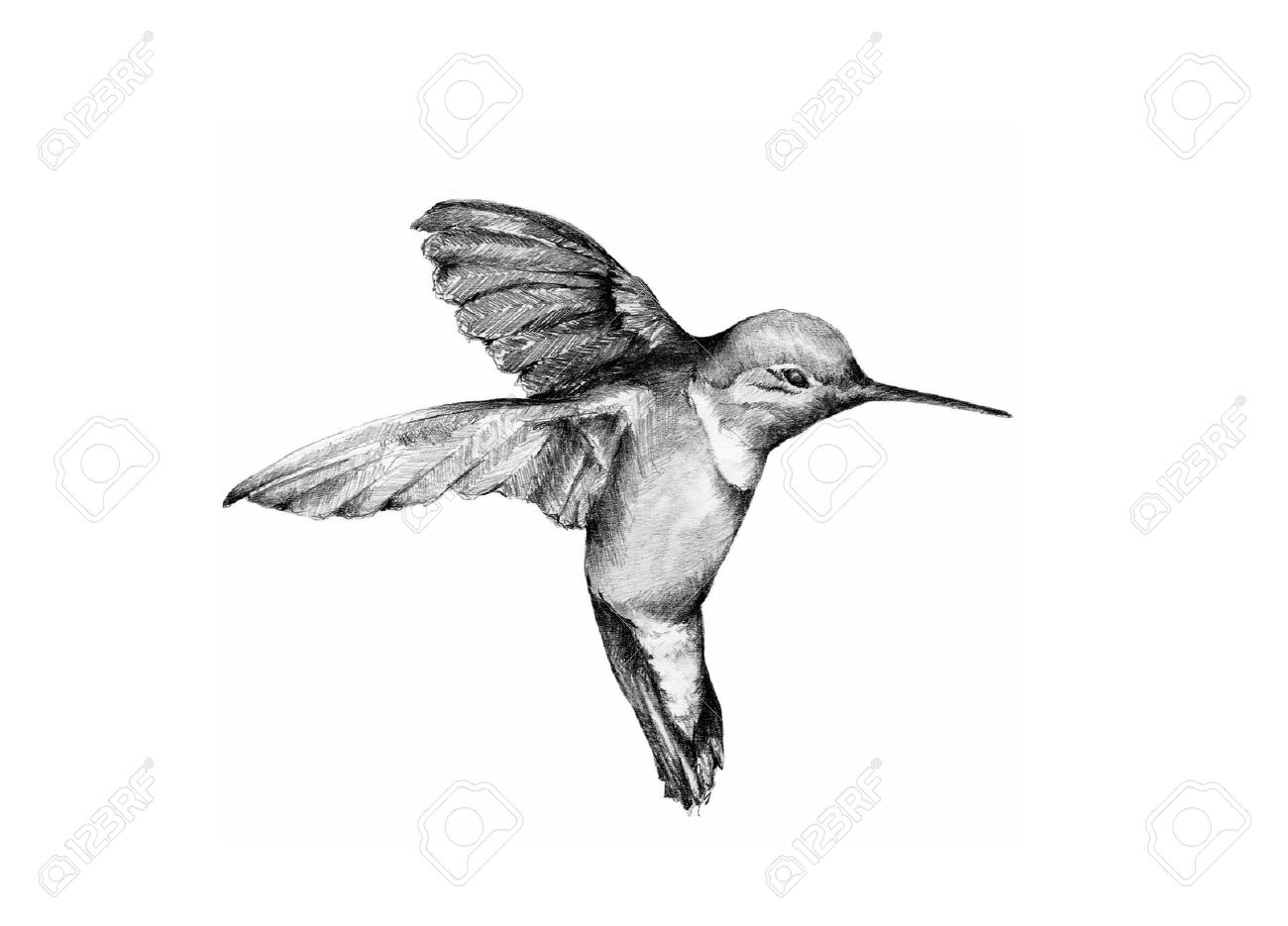 Sketches of hummingbirds