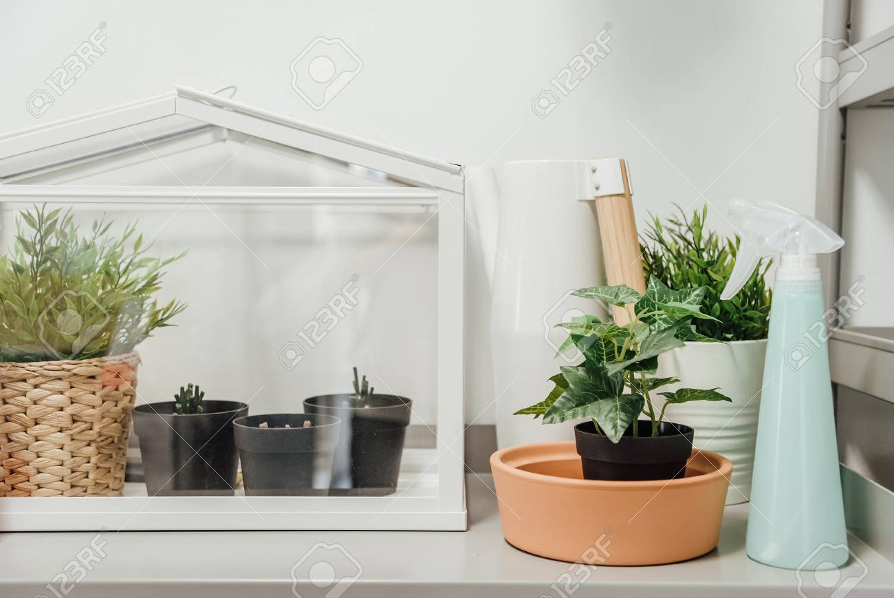 Miniature Green House Terrarium.White Tabletop Mini Greenhouse With Plant  In Pot.Glass House