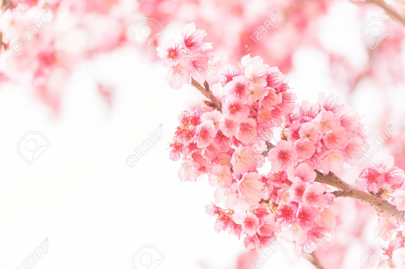 Sakura branch: what is, how to do massage, features of the procedure 79