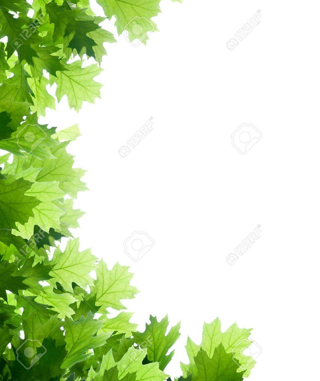 oak tree images u0026 stock pictures royalty free oak tree photos and