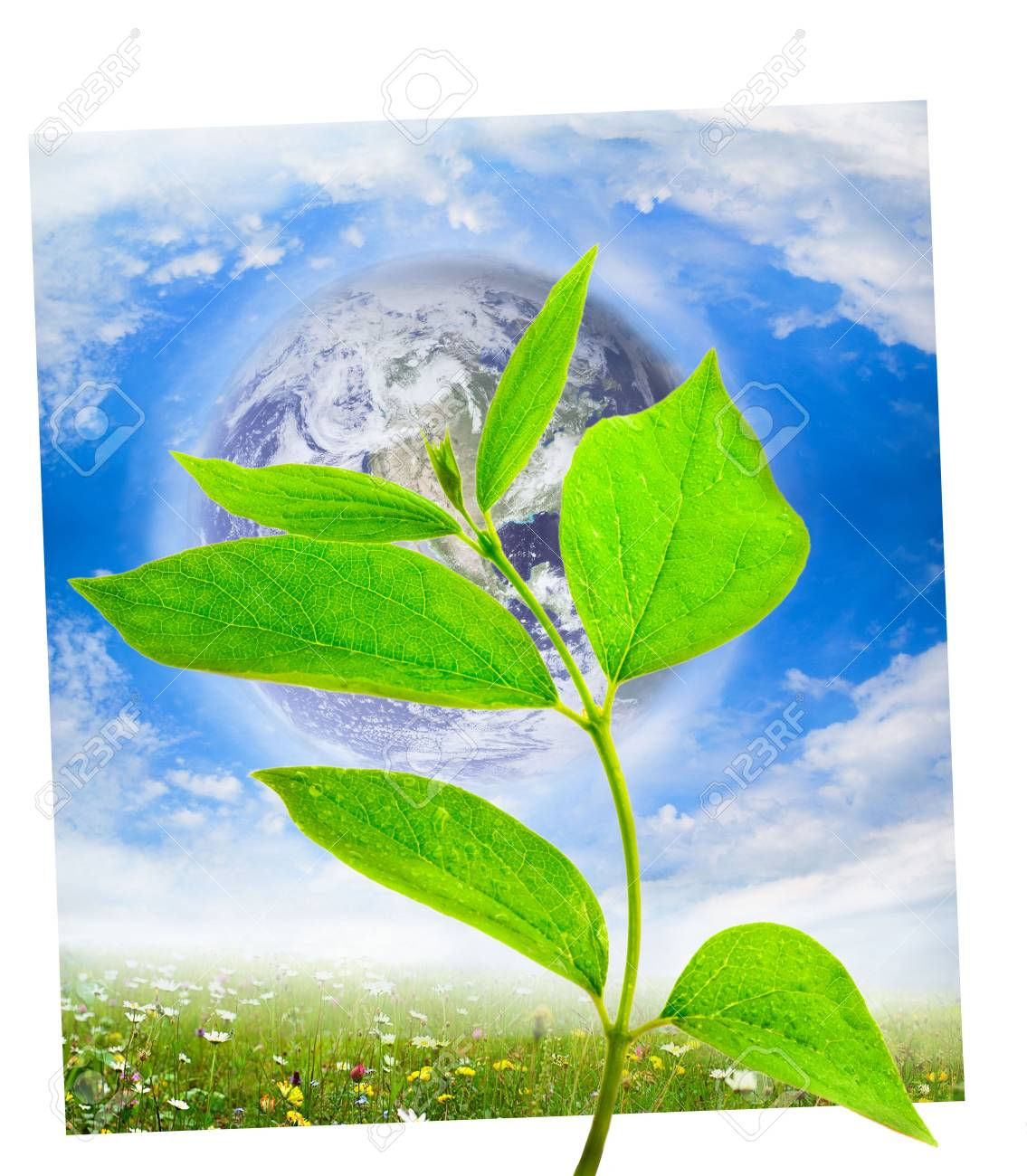 earth globe with green leaf Stock Photo - 5553175