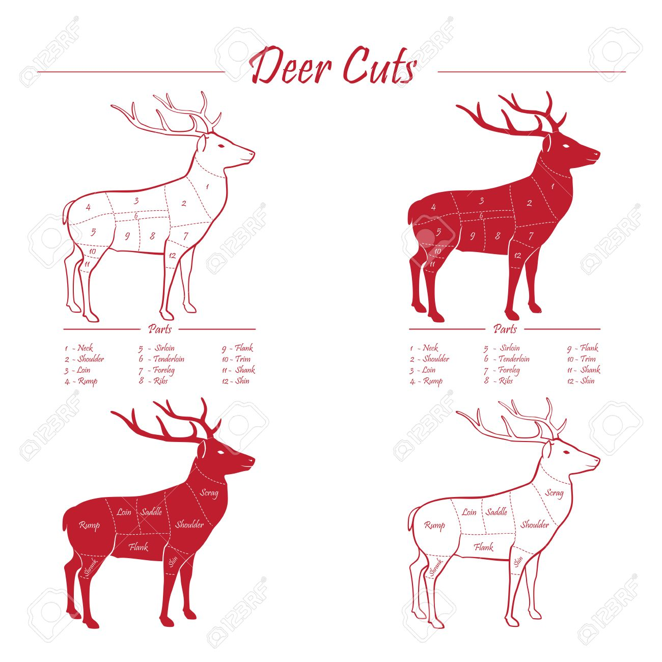 Swell Deer Venison Meat Cut Diagram Scheme Elements Set Red On Wiring Digital Resources Hetepmognl