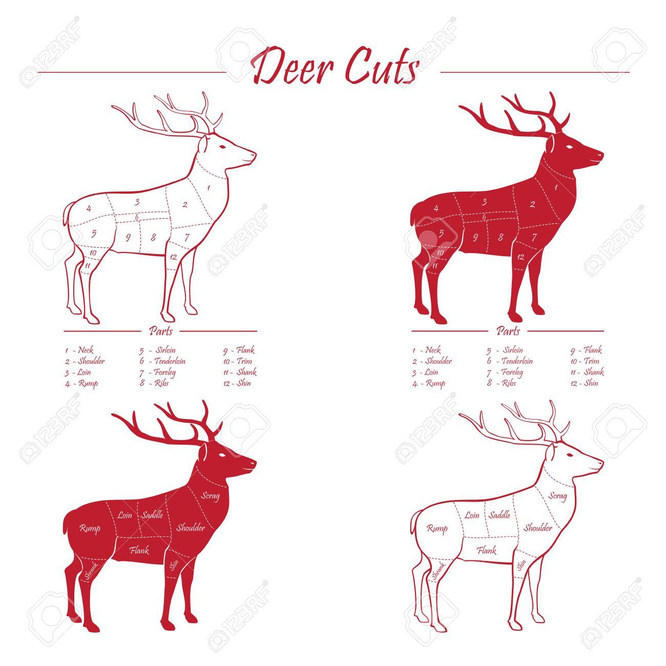 deer venison meat cut diagram scheme elements set red on rh 123rf com venison meat cuts diagram Vegetable Cuts Diagram
