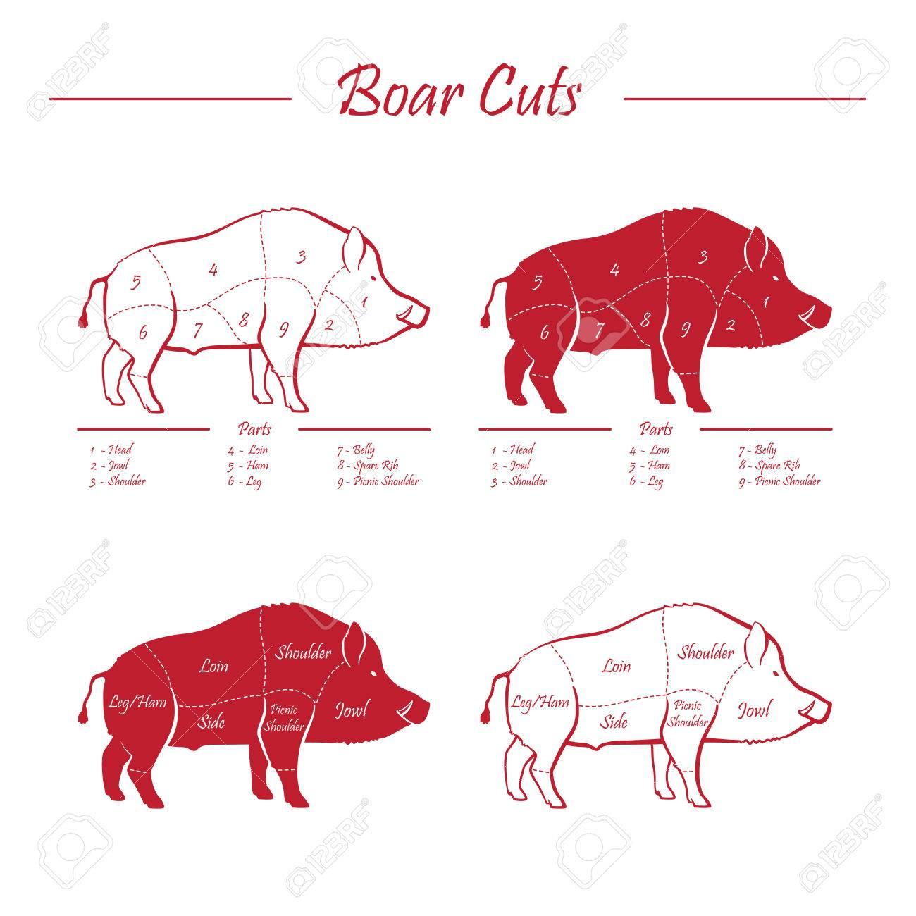 Wild Hog, Boar Game Meat Cut Diagram Scheme - Elements Set Red ...