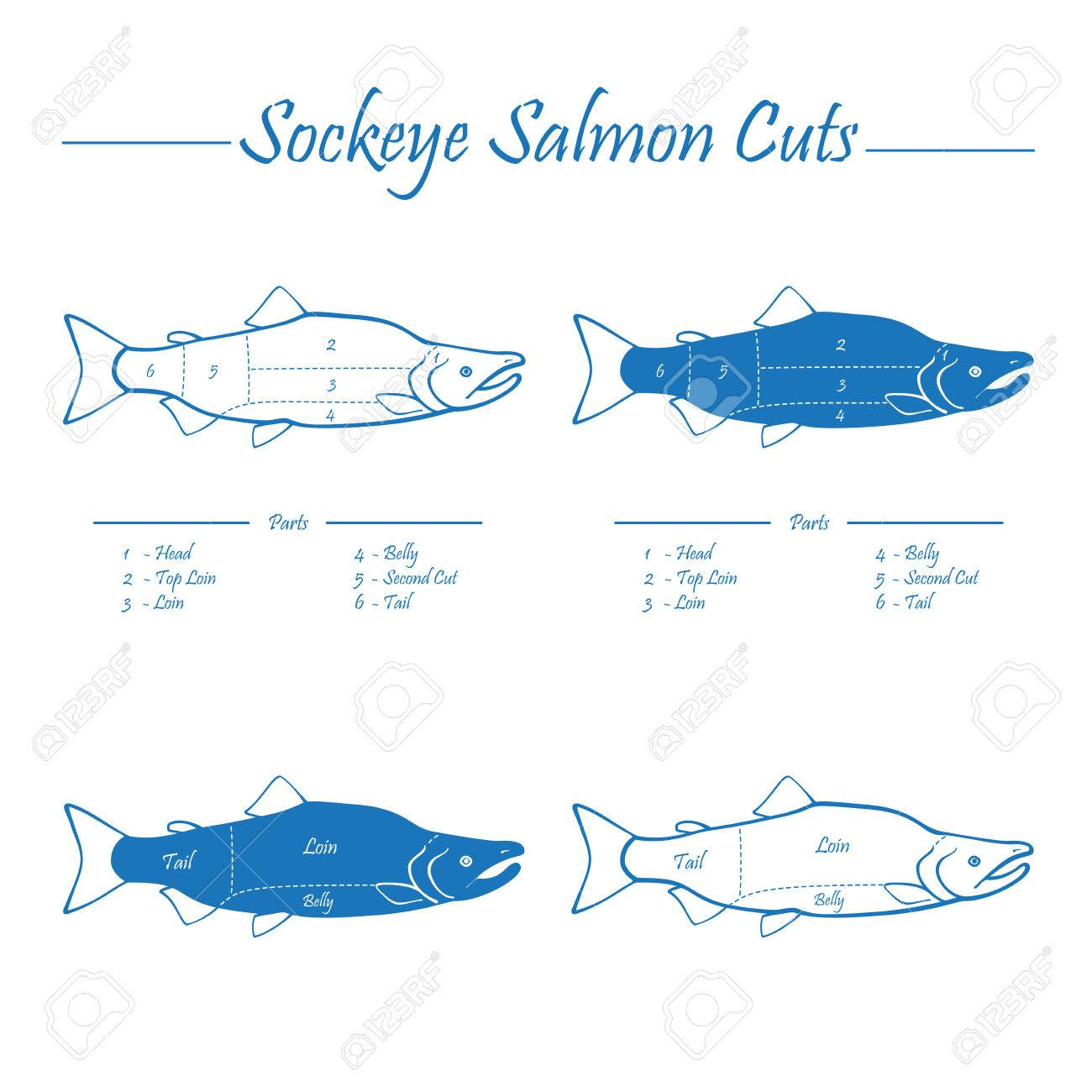 Pacific Salmon With Diagram - Example Electrical Circuit •