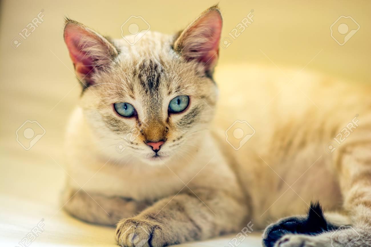 Sucer la chatte Galerie