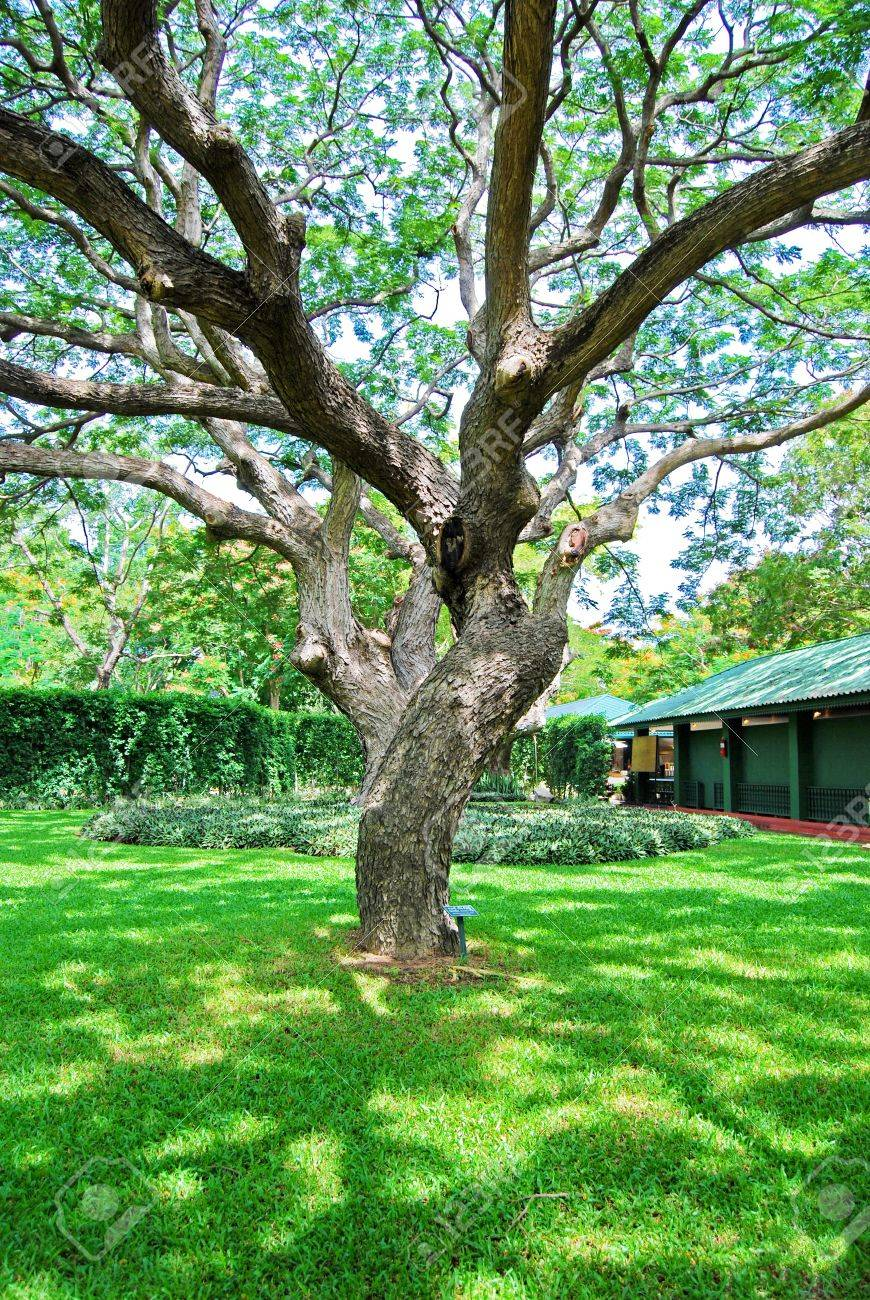 Branches Of Big Trees In The Garden Stock Photo Picture And