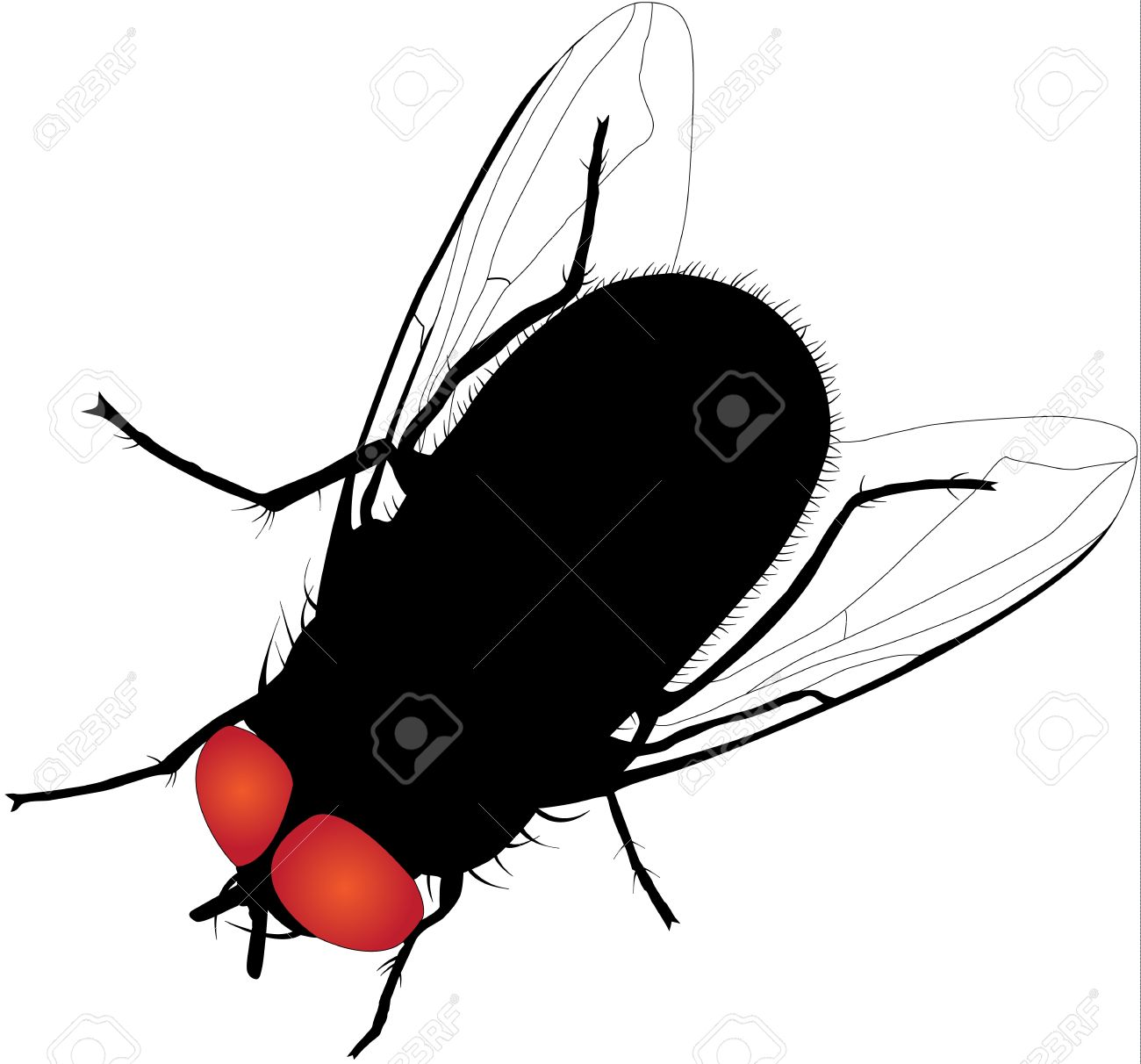 House Fly Silhouette On White Background Royalty Free Cliparts ...