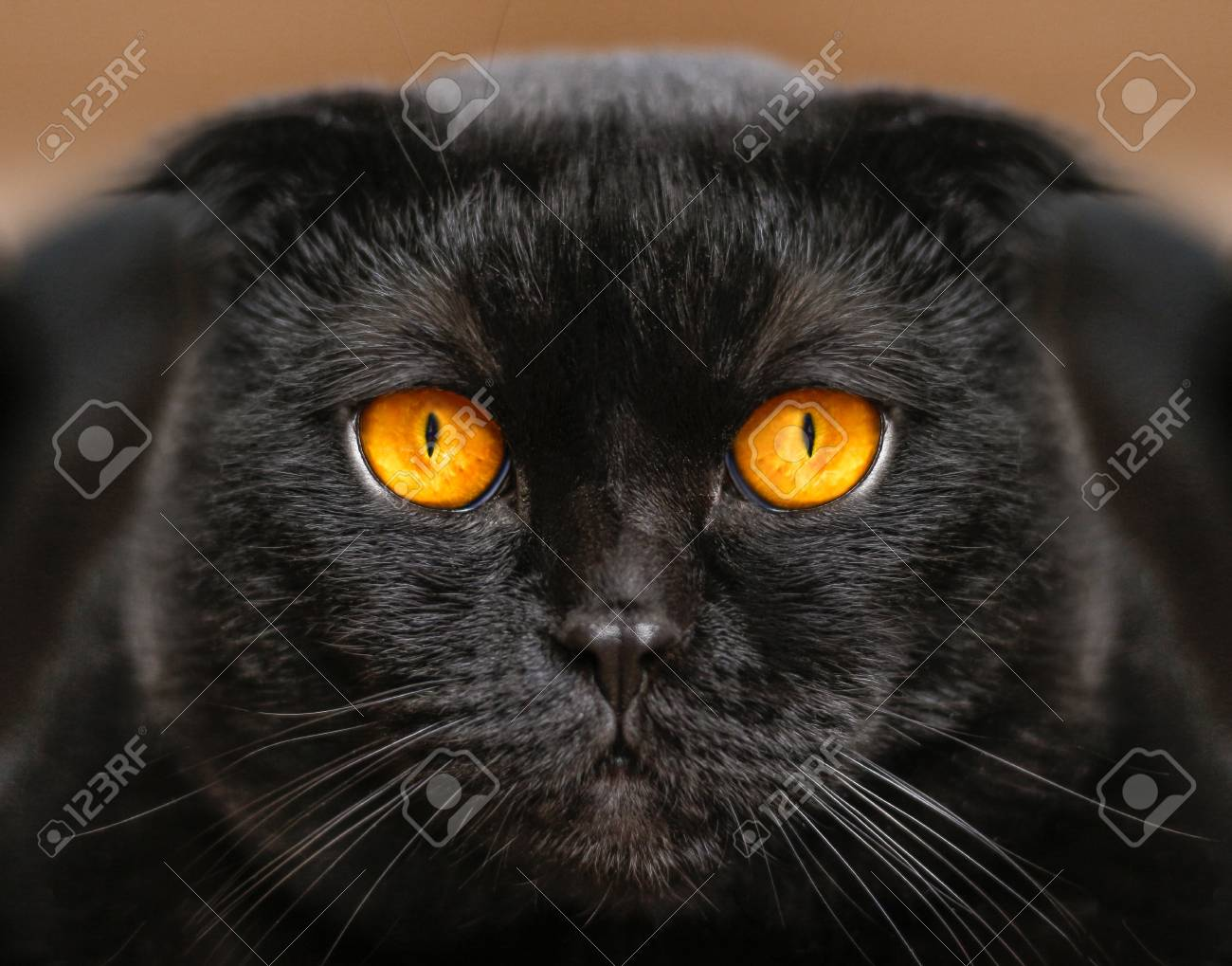 Chaud noir coq sexe