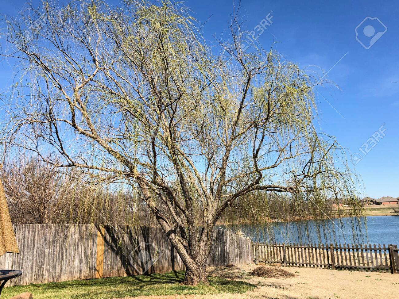 Willow Tree By A Wooden Fence And Pond In Winter Stock Photo Picture And Royalty Free Image Image 134830635