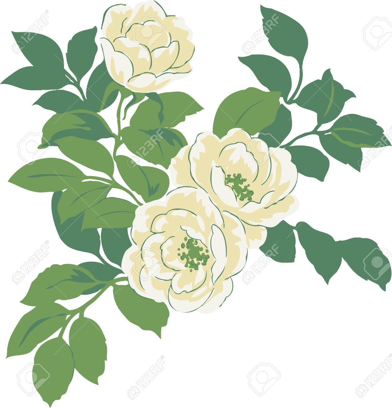 Flowers White Roses With Green Leaves Natural Pattern To Design