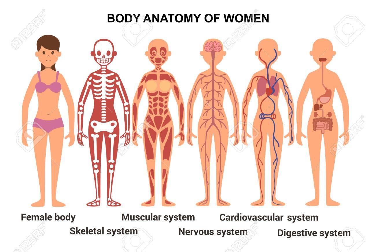 Anatomía Del Cuerpo Femenino. Cartel Anatómico. Sistema Esquelético ...