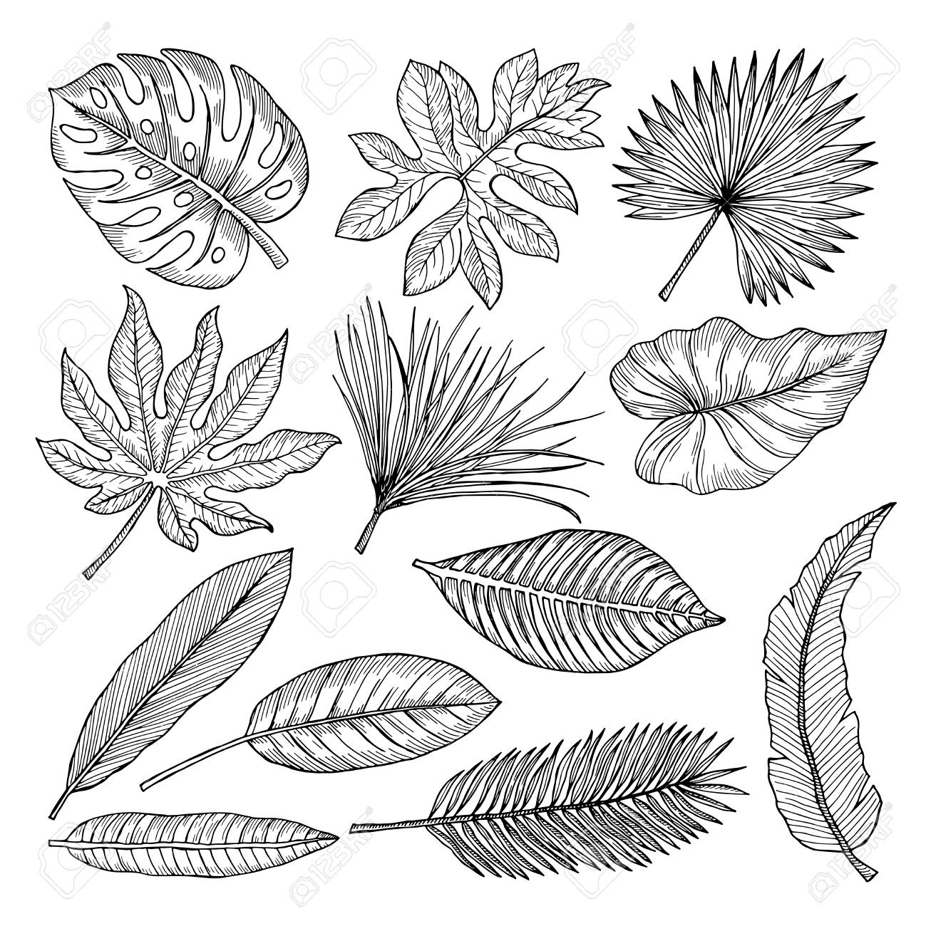 Tropical Leaves And Plants Vector Hand Drawing Pictures Isolate Royalty Free Cliparts Vectors And Stock Illustration Image 87000068 These tropical leaves have transparent backgrounds, thus you can easily drag and drop them in your layout. tropical leaves and plants vector hand drawing pictures isolate