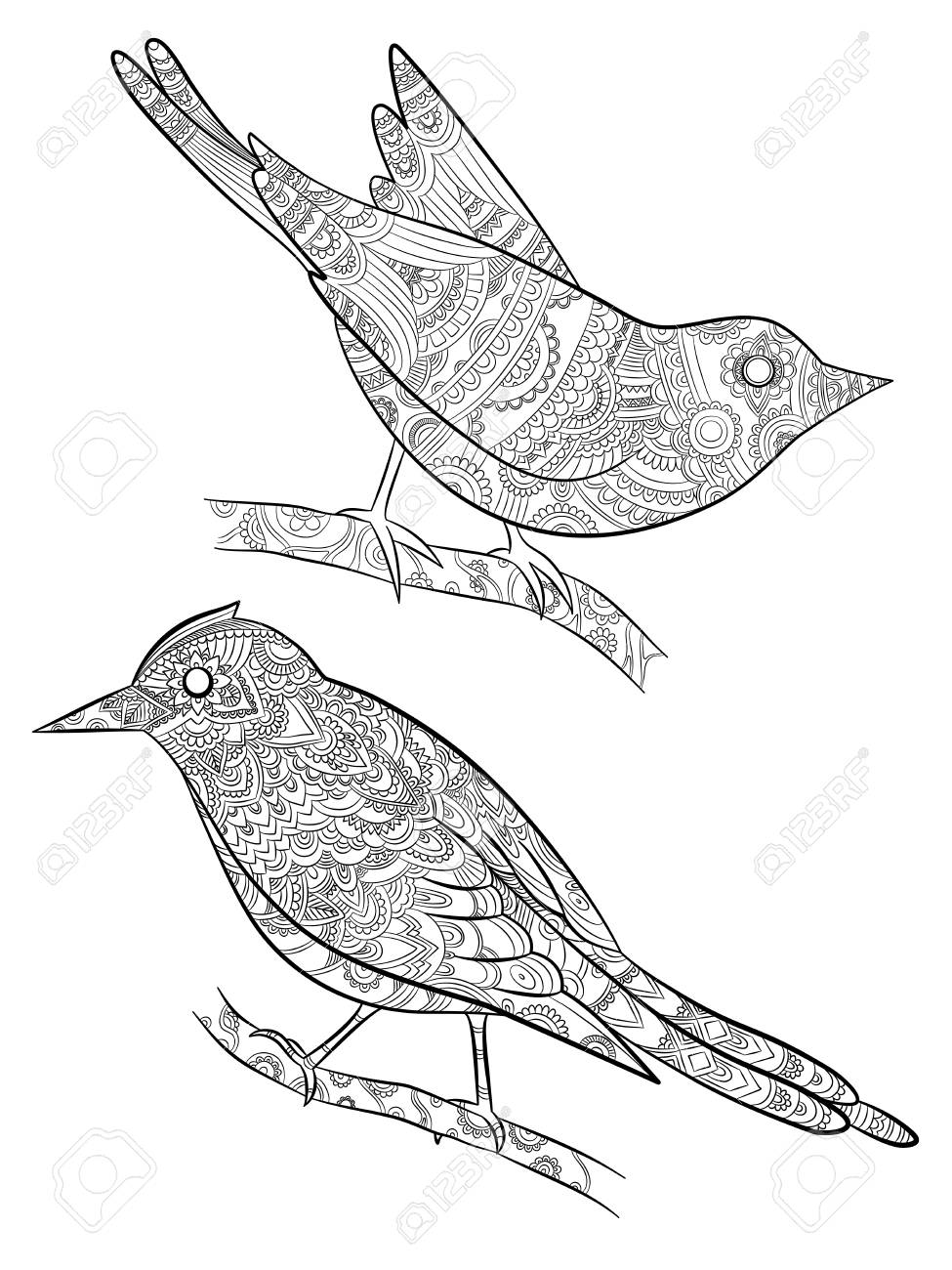 Coloring pages for adults little wild birds for with pattern vector illustration on body bird