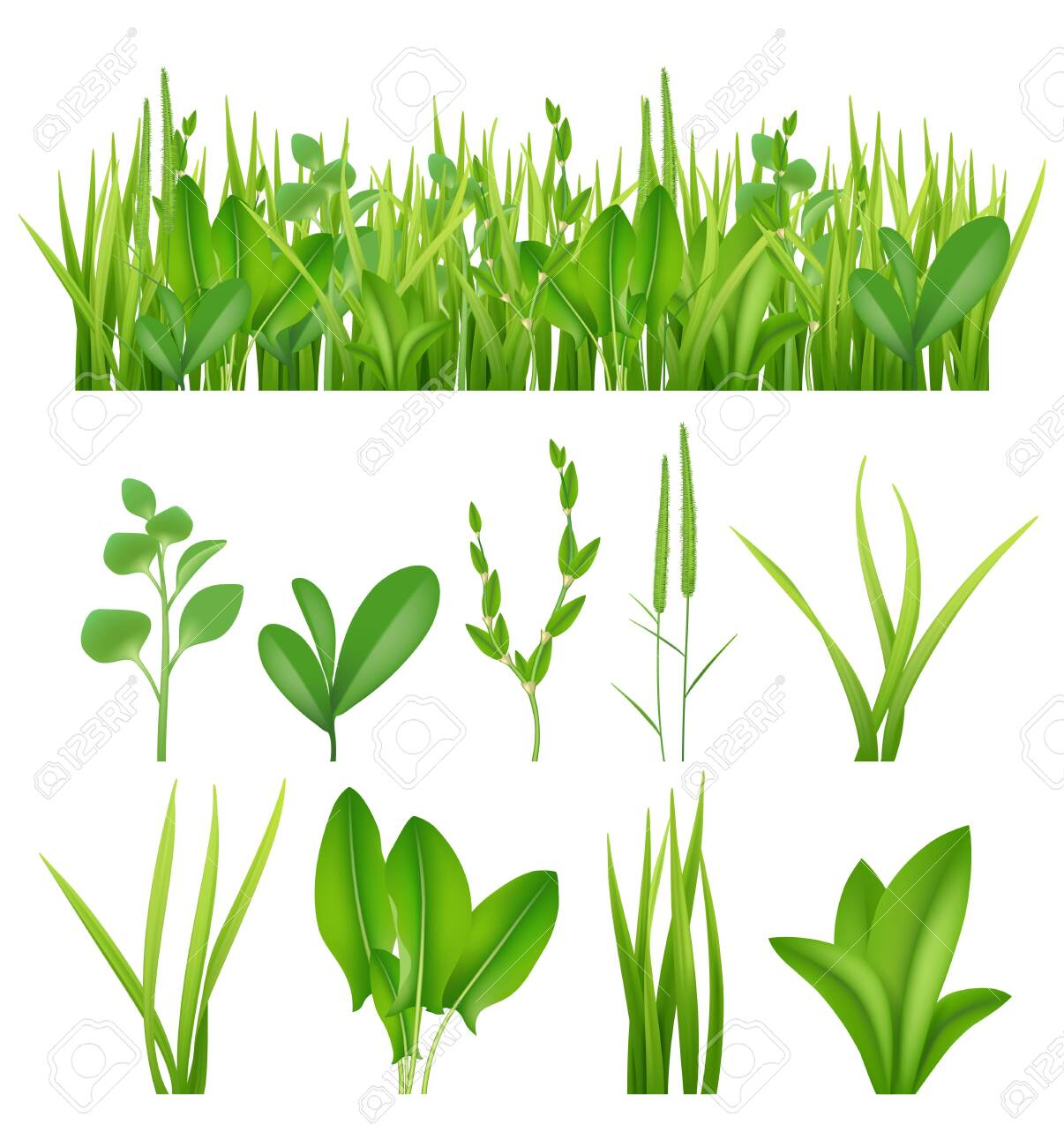 Grass realistic. Ecology set green herbs leaves plants lifes meadows vector elements collection. Grass green meadow, lawn summer lush illustration - 133630774
