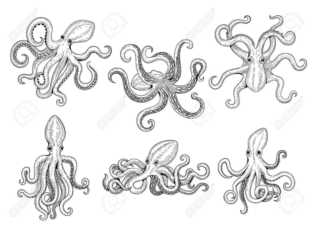 Octopus. Ocean fishes big underwater monster wild squid vector hand drawn marine tattoo template. Illustration octopus ocean, animal monster tattoo - 140345053