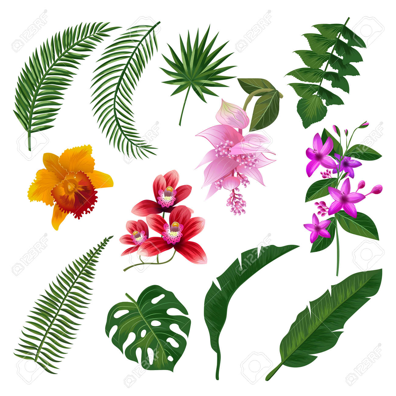 Set of Tropical flowers bouquet. Vector illustration of leaves and branches. Color flower and green plant, summer blossom tropical flower - 165952586