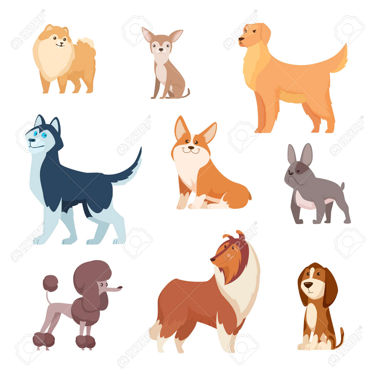 Dogs breeds. Funny true and faithful animals playing in various poses cartoon puffy puppy poodle bulldog dachshund exact vector illustrations collection. Pet dog animal, funny puppy cartoon - 166824062