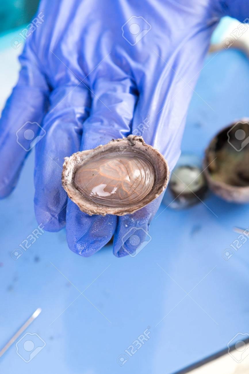 Disección De Un Ojo De Ovejas Para La Anatomía Y La Fisiología De ...