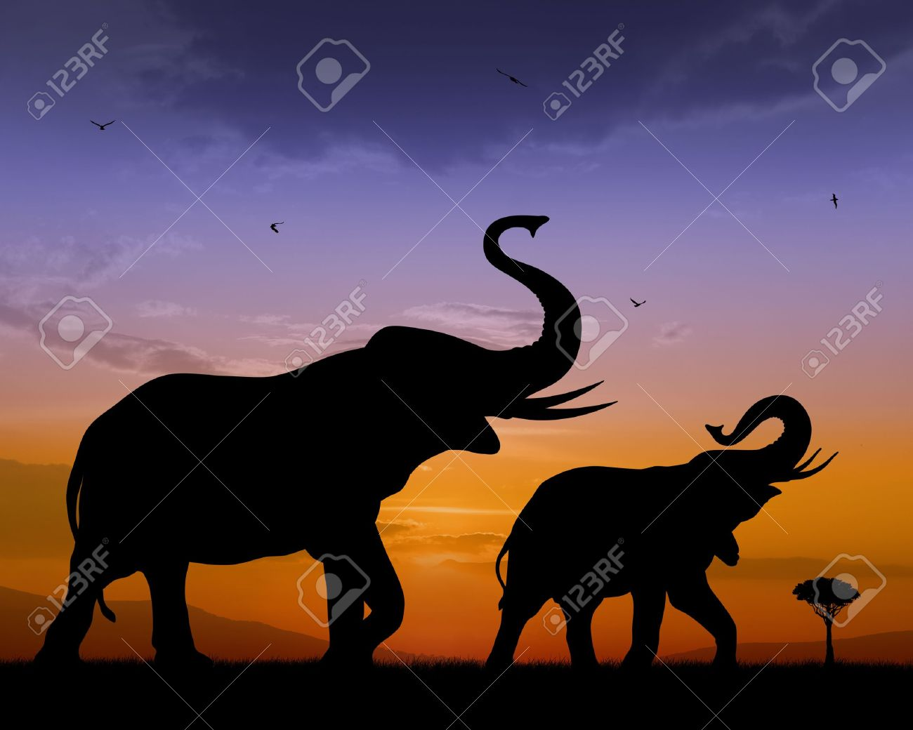 Couple of elephants on sunset bacckground Stock Photo - 12194212