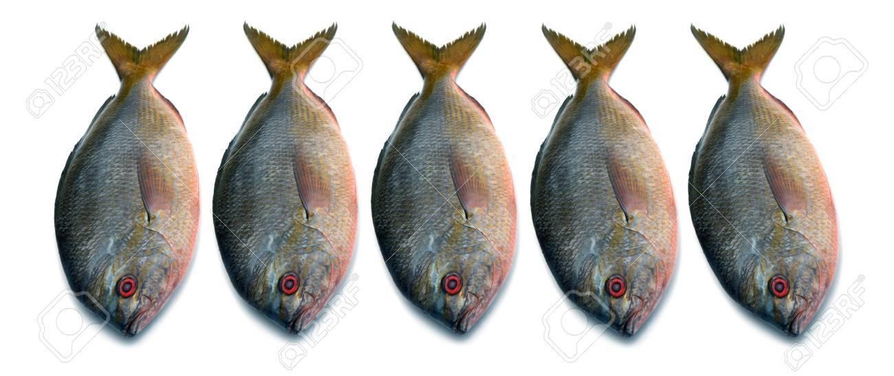 Yellowtail fusilier fish isolated on white background Stock Photo - 15469120