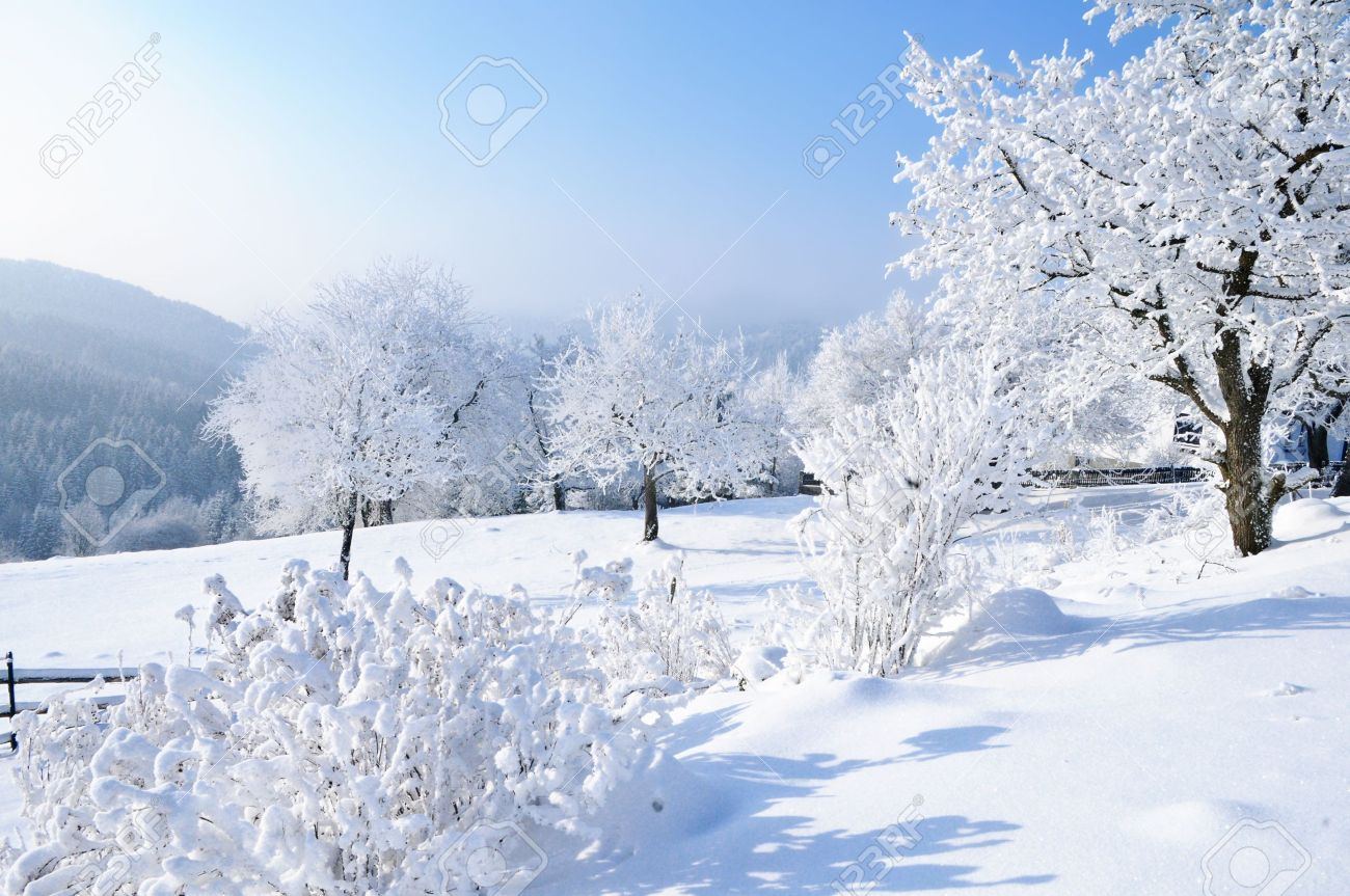 Winter Garden in Austria Stock Photo - 6325349