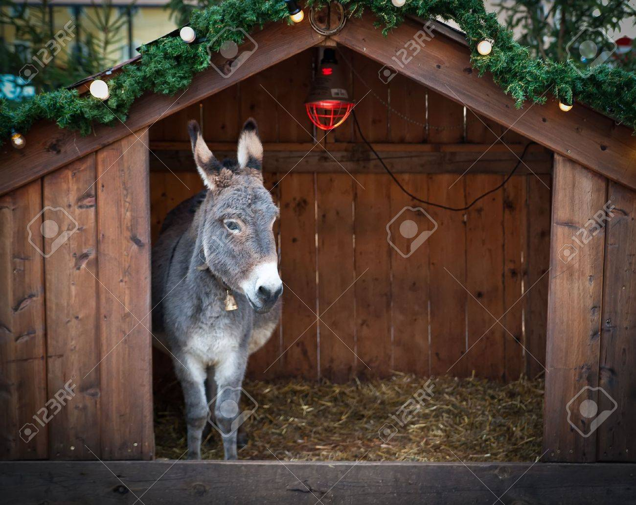 Donkey in a wooden Christmas Stable Stock Photo - 8242108