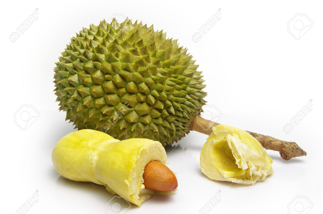 Thorny, Pungent Durian Fruit (Durio Zibethinus). Whole Fruit ...