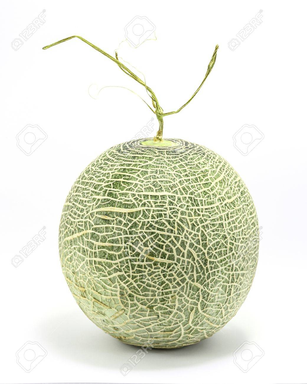 Cantaloupe Rock Melon Green Cantelope Cantaloupe Muskmelon Mushmelon Stock Photo Picture And Royalty Free Image Image 50766976 The cantaloupe, rockmelon (australia), sweet melon, or spanspek (south africa) is a melon that is a variety of the muskmelon species (cucumis melo) from the family cucurbitaceae. cantaloupe rock melon green cantelope cantaloupe muskmelon mushmelon stock photo picture and royalty free image image 50766976