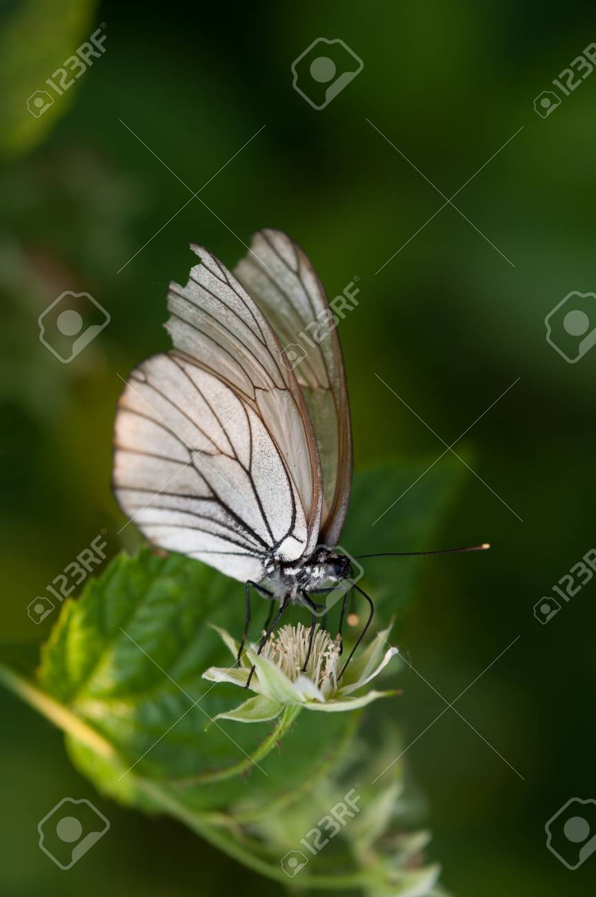 Close up photograph of the butterfly Stock Photo - 20429975