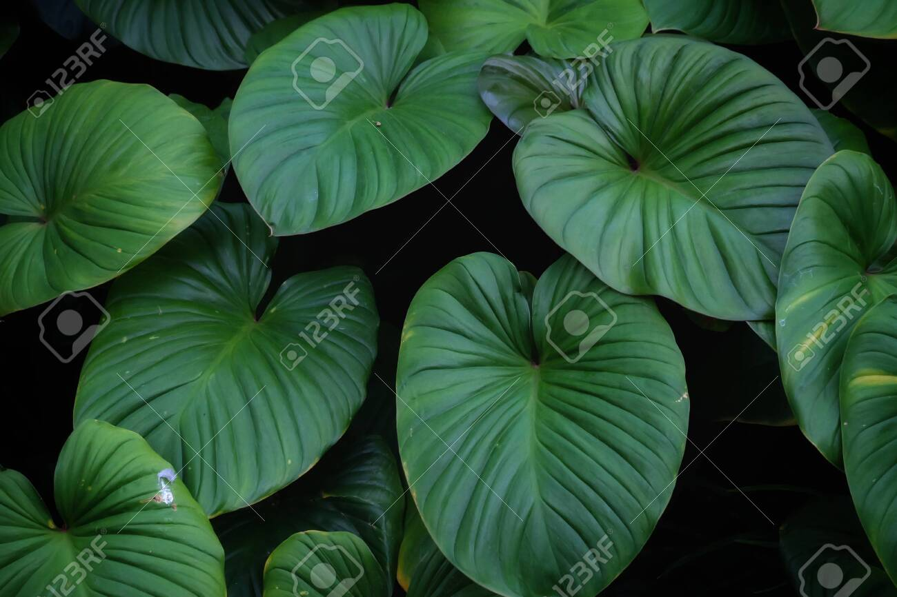 Tropical fern leaves growing in botanical garden with green color pattern and dark light background - 148705535