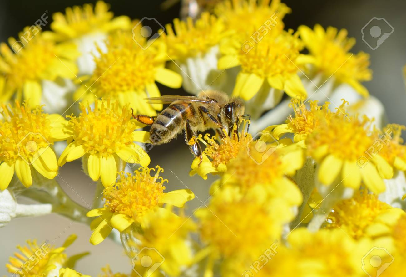 Honey Bee on a Yellow Flower Nature Abstract - 40952406