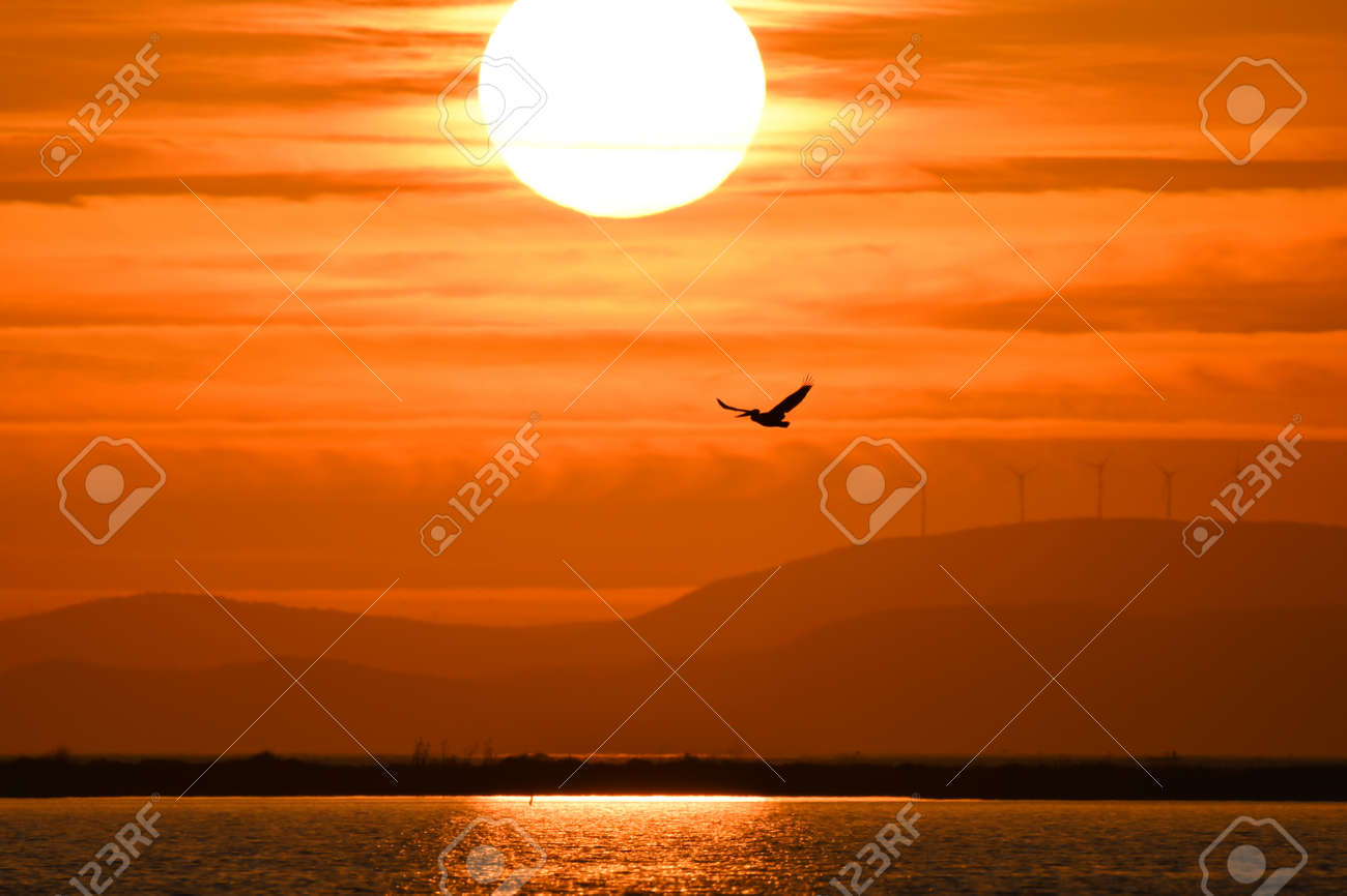Pelican flying on the sea at sunset, silhouette - 164532602