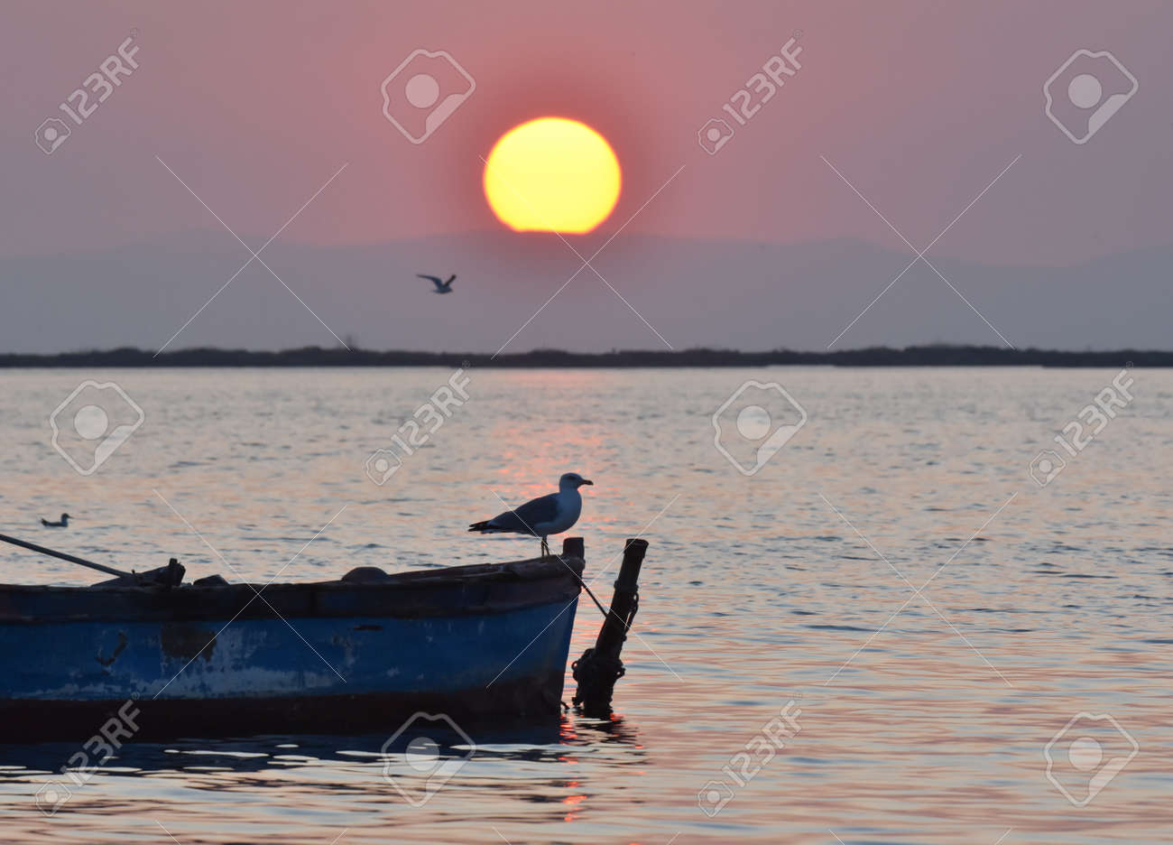Seagull standing on a boat at sunset - 165265035