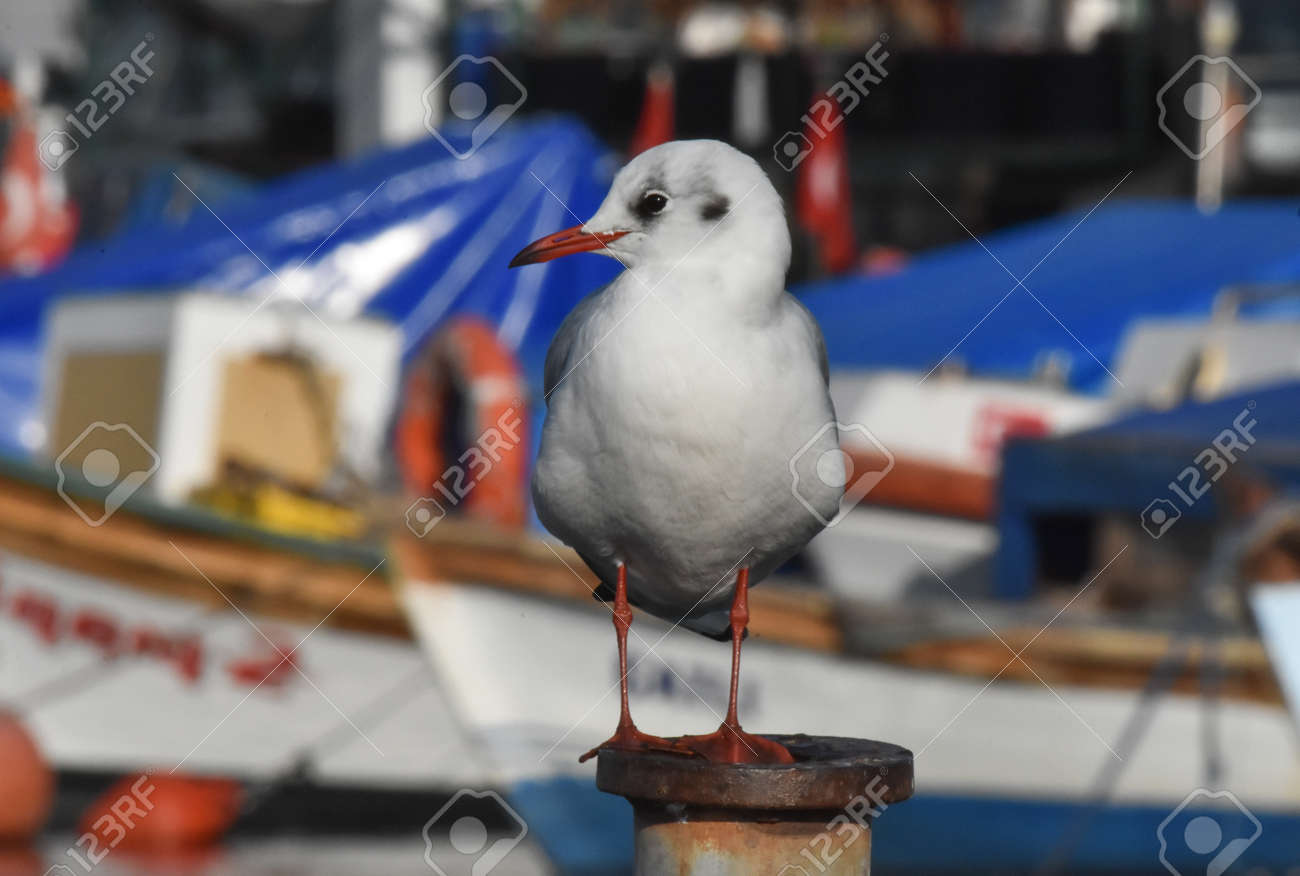 Seagull standing on a iron - 165264922