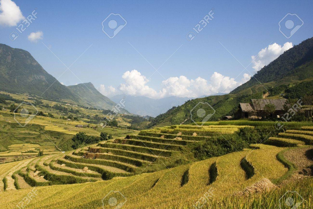 This photo is from Sapa, Vietnam.  Sapa is a top tourist destination in Vietnam.  People can trek and stay at the homes of people from different minority tribes.  The terraces are used to grow rice.  The golden colour shows that it's harvest time. Stock Photo - 4015217