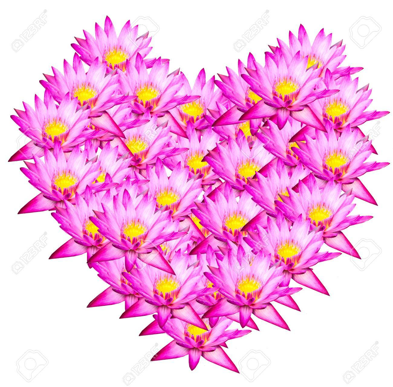Pink lotus Heart shape on white background Stock Photo - 13320473
