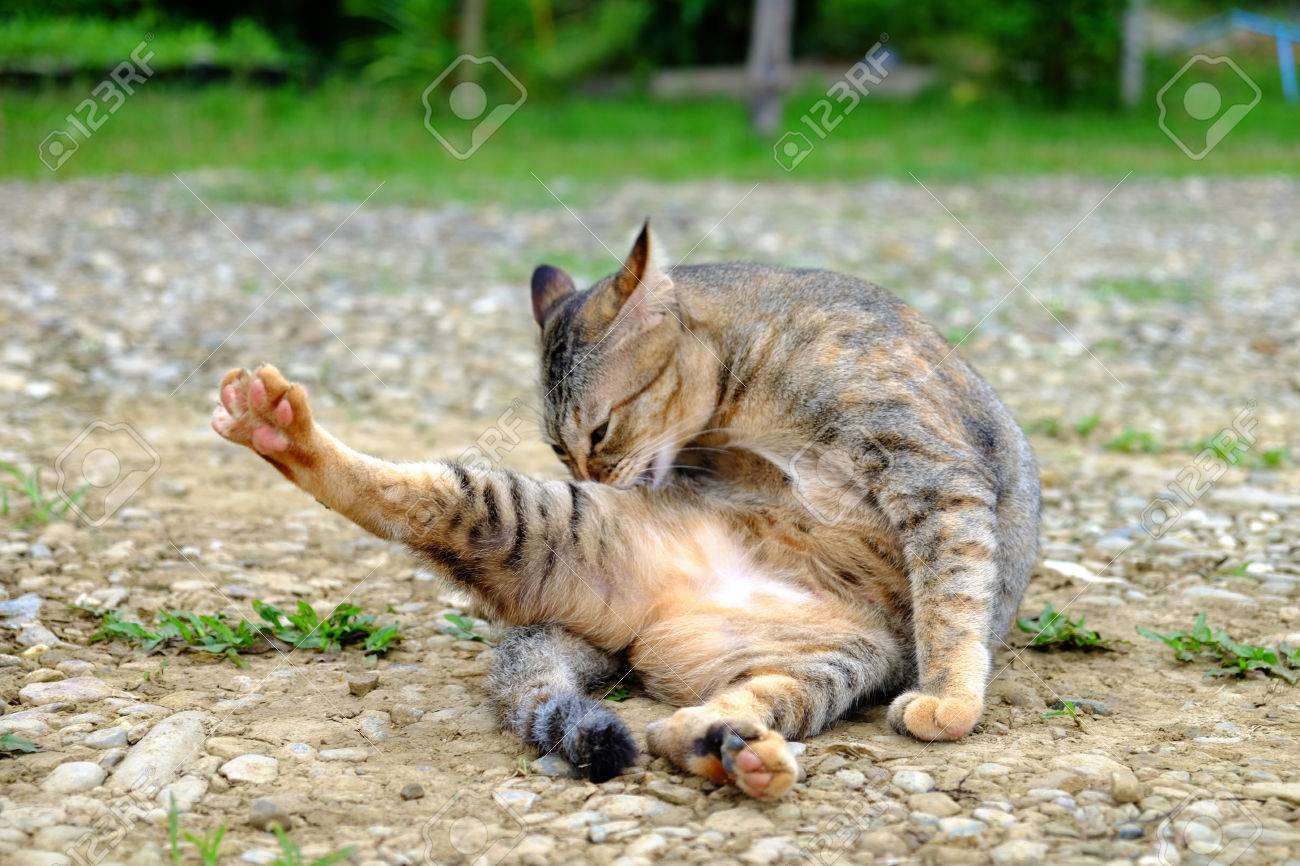 8 Really Strange Things Cats Do - and Why