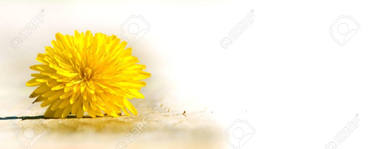 Blume Löwenzahn - Vorlage Lizenzfreie Fotos, Bilder Und Stock ...