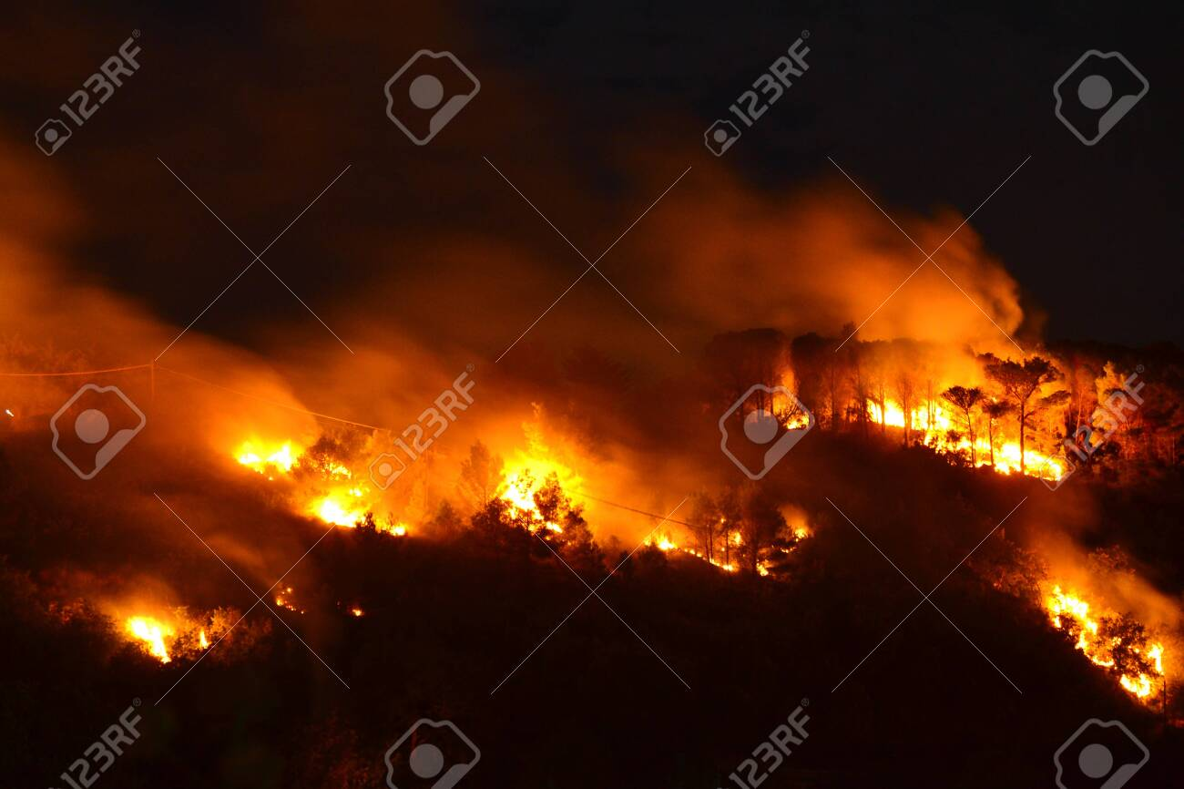 Environmental disaster, Forest fire - 132227767