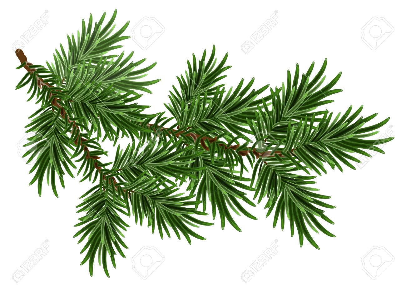 Fur-tree branch. Green fluffy pine branch. Isolated on white - 47557671