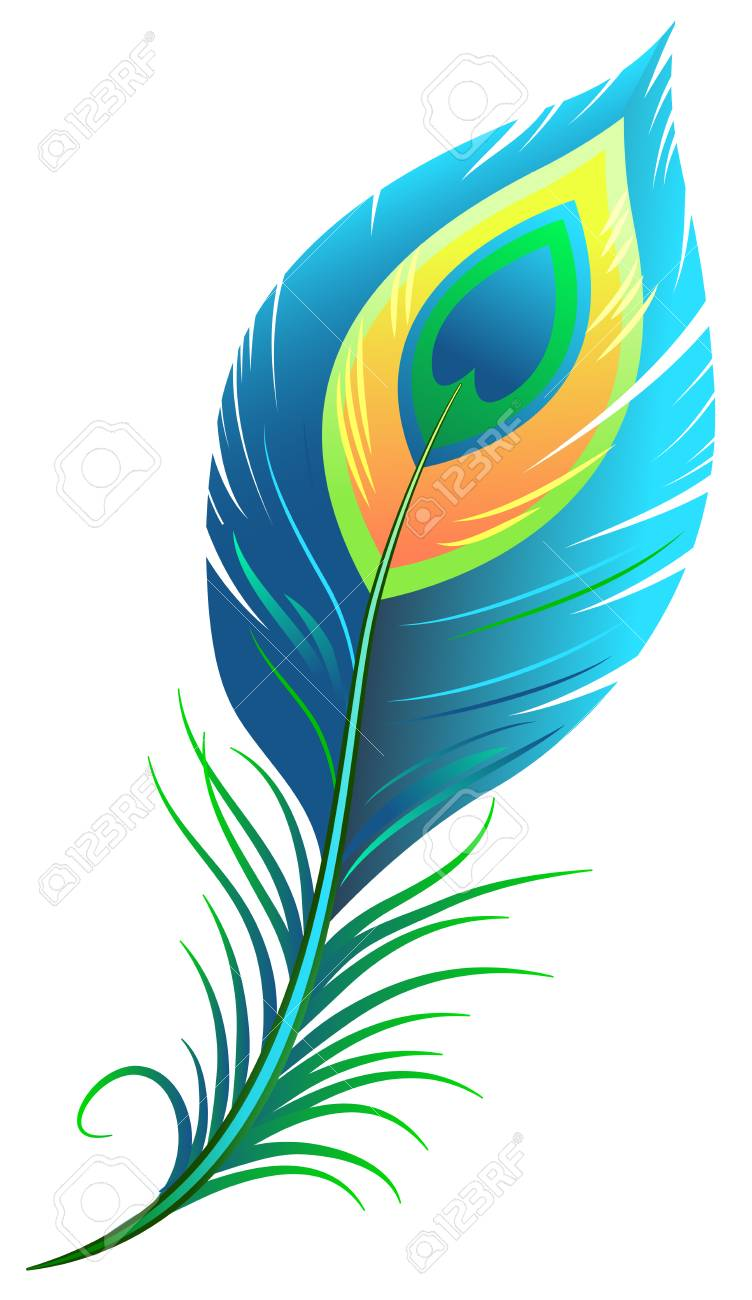 peacock feather isolated illustration format royalty free cliparts rh 123rf com